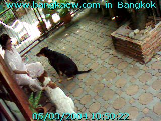 Watch Pingpong On-line........................................สนใจร่วมสนับสนุน  ติดต่อ  bangkaew@bangkaew.com