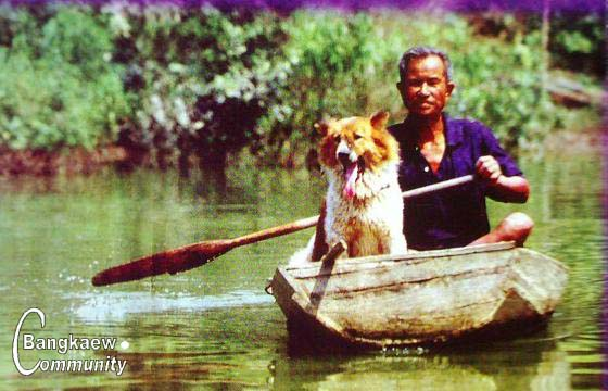 http://www.bangkaew.com/pdbt/index_image002.jpg